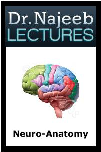 Dr  Najeeb Neuroanatomy & Neurophysiology Lectures | MBBS